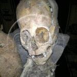 Encuentran en Peru un esqueleto de Alien