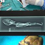 Develan el cuerpo de un alien en documental Sirius